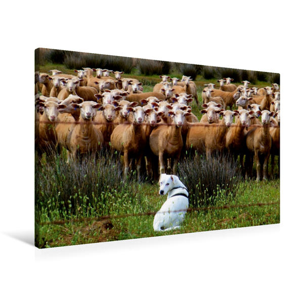 Premium Textil-Leinwand 90 cm x 60 cm quer, ...einmal Schafe zu hüten | Wandbild, Bild auf Keilrahmen, Fertigbild auf echter Leinwand, Leinwanddruck - Coverbild