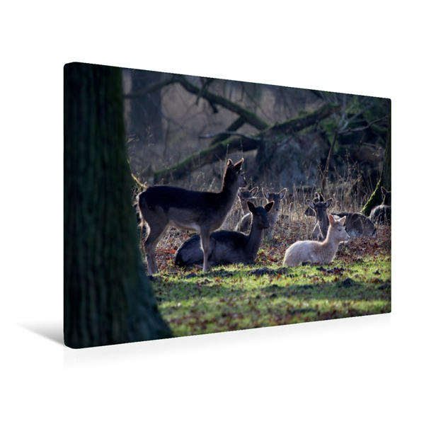 Premium Textil-Leinwand 45 cm x 30 cm quer, Tiergarten | Wandbild, Bild auf Keilrahmen, Fertigbild auf echter Leinwand, Leinwanddruck - Coverbild
