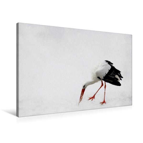 Premium Textil-Leinwand 90 cm x 60 cm quer, Storch | Wandbild, Bild auf Keilrahmen, Fertigbild auf echter Leinwand, Leinwanddruck - Coverbild