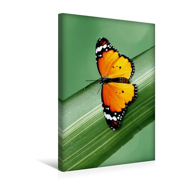 Premium Textil-Leinwand 30 cm x 45 cm hoch, Schöner exotisch leuchtender Schmetterling | Wandbild, Bild auf Keilrahmen, Fertigbild auf echter Leinwand, Leinwanddruck - Coverbild