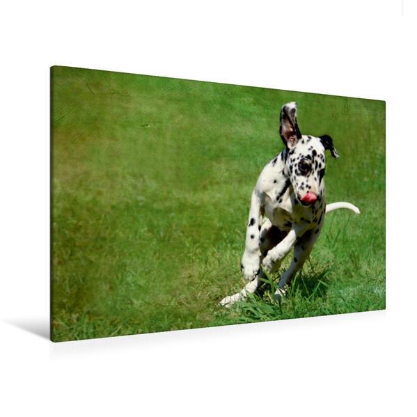 Premium Textil-Leinwand 120 cm x 80 cm quer, Spielender Dalmatinerwelpe | Wandbild, Bild auf Keilrahmen, Fertigbild auf echter Leinwand, Leinwanddruck - Coverbild