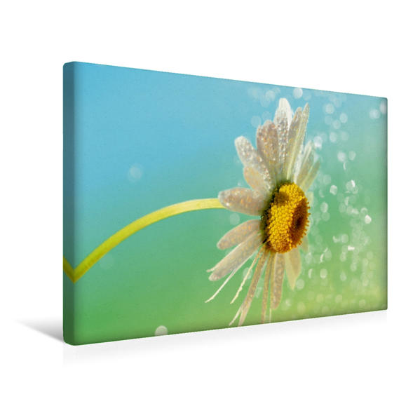 Premium Textil-Leinwand 45 cm x 30 cm quer, Kleine Margerite im Sommersonnenschein | Wandbild, Bild auf Keilrahmen, Fertigbild auf echter Leinwand, Leinwanddruck - Coverbild