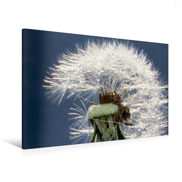 Premium Textil-Leinwand 120 cm x 80 cm quer, zarte Pusteblumeschirmchen | Wandbild, Bild auf Keilrahmen, Fertigbild auf echter Leinwand, Leinwanddruck - Coverbild