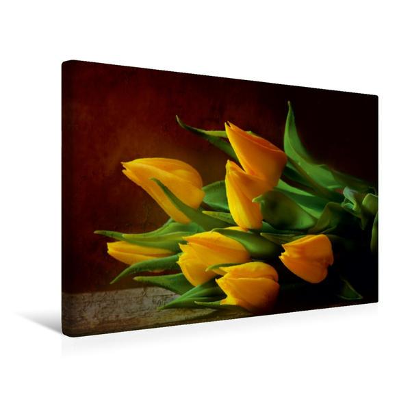 Premium Textil-Leinwand 45 cm x 30 cm quer, Ein Motiv aus dem Kalender Tulpen | Wandbild, Bild auf Keilrahmen, Fertigbild auf echter Leinwand, Leinwanddruck - Coverbild