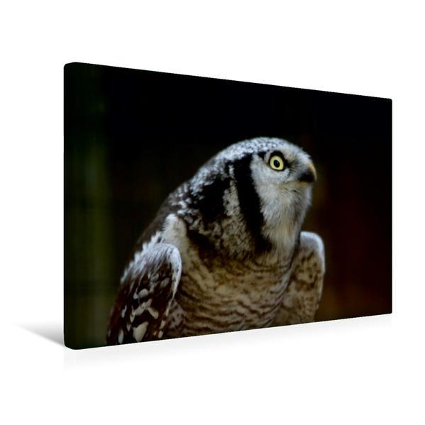 Premium Textil-Leinwand 45 cm x 30 cm quer, Sperlingskautz | Wandbild, Bild auf Keilrahmen, Fertigbild auf echter Leinwand, Leinwanddruck - Coverbild