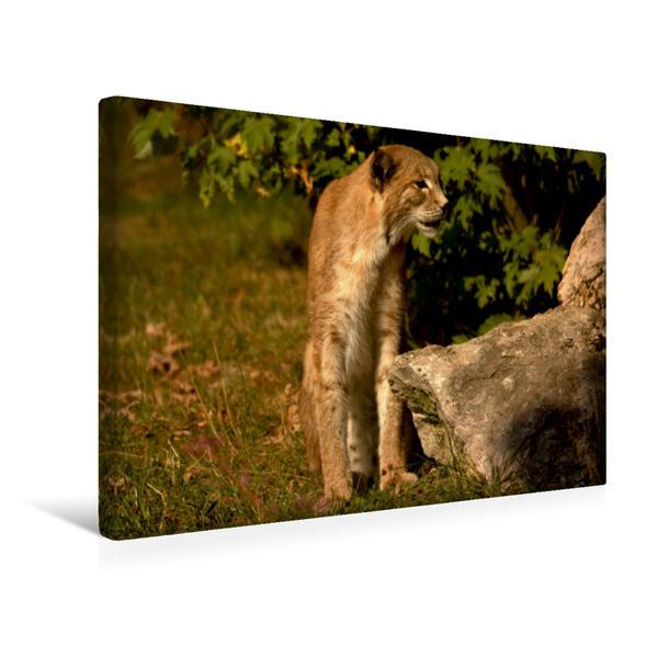 Premium Textil-Leinwand 45 cm x 30 cm quer, Ein Motiv aus dem Kalender Der Luchs / Geburtstagskalender | Wandbild, Bild auf Keilrahmen, Fertigbild auf echter Leinwand, Leinwanddruck - Coverbild