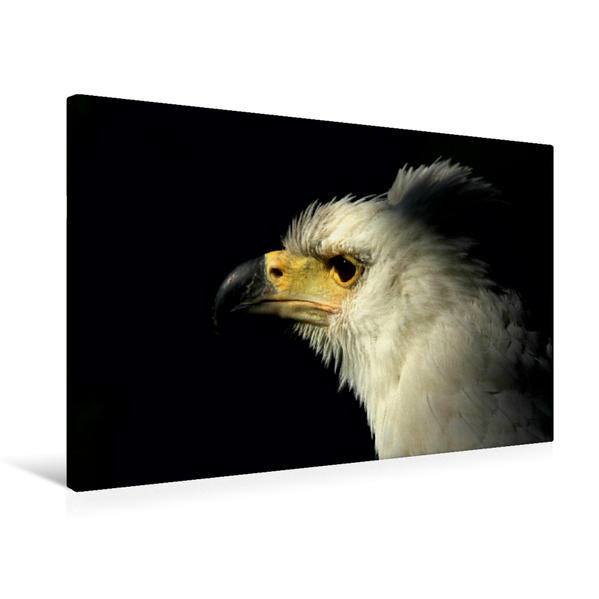 Premium Textil-Leinwand 75 cm x 50 cm quer, Afrikanischer Schreiseeadler | Wandbild, Bild auf Keilrahmen, Fertigbild auf echter Leinwand, Leinwanddruck - Coverbild