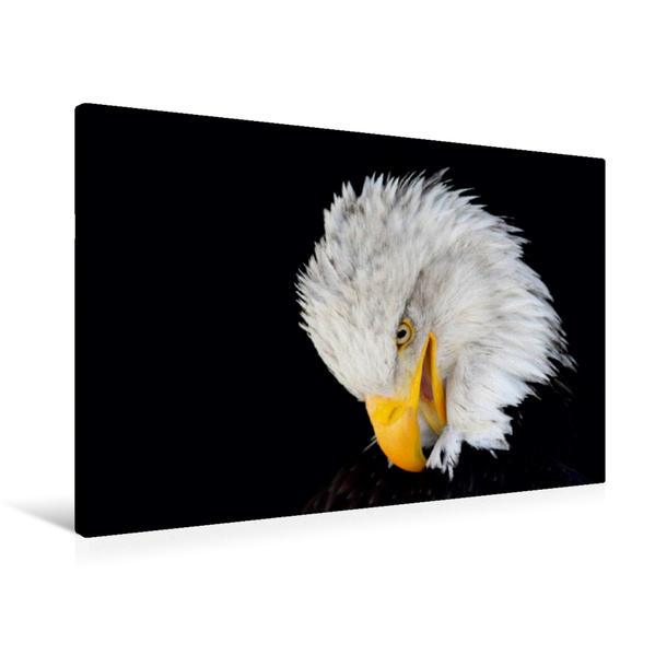Premium Textil-Leinwand 90 cm x 60 cm quer, Ein Motiv aus dem Kalender Gefiederte Jäger / Geburtstagskalender | Wandbild, Bild auf Keilrahmen, Fertigbild auf echter Leinwand, Leinwanddruck - Coverbild