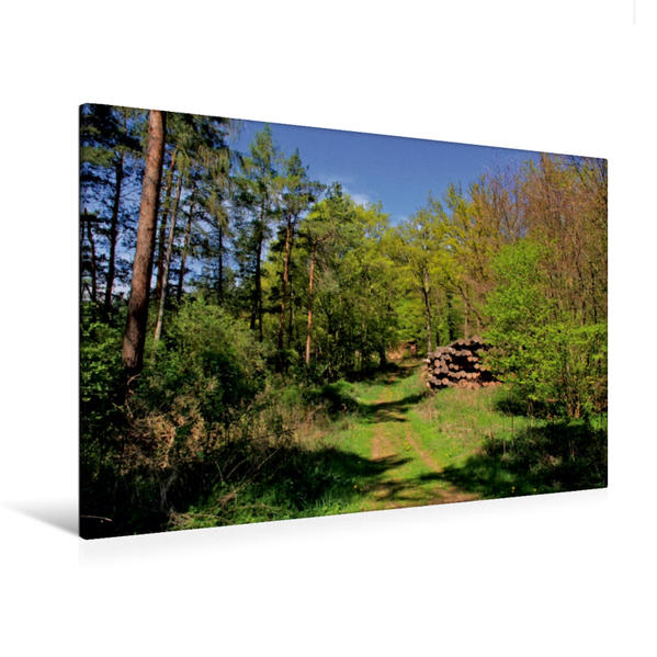 Premium Textil-Leinwand 120 cm x 80 cm quer, Herrlicher Waldweg | Wandbild, Bild auf Keilrahmen, Fertigbild auf echter Leinwand, Leinwanddruck - Coverbild