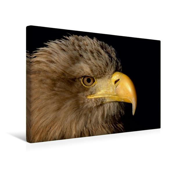 Premium Textil-Leinwand 45 cm x 30 cm quer, Seeadler | Wandbild, Bild auf Keilrahmen, Fertigbild auf echter Leinwand, Leinwanddruck - Coverbild