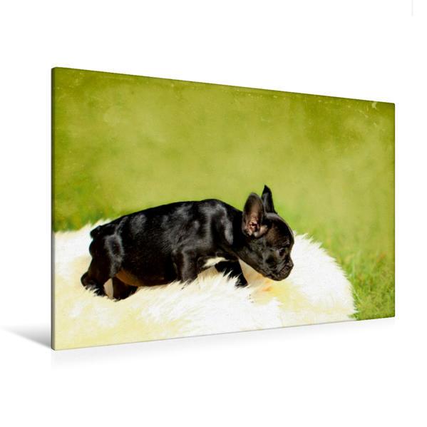 Premium Textil-Leinwand 120 cm x 80 cm quer, Kleiner niedlicher Bulldoggenwelpe | Wandbild, Bild auf Keilrahmen, Fertigbild auf echter Leinwand, Leinwanddruck - Coverbild
