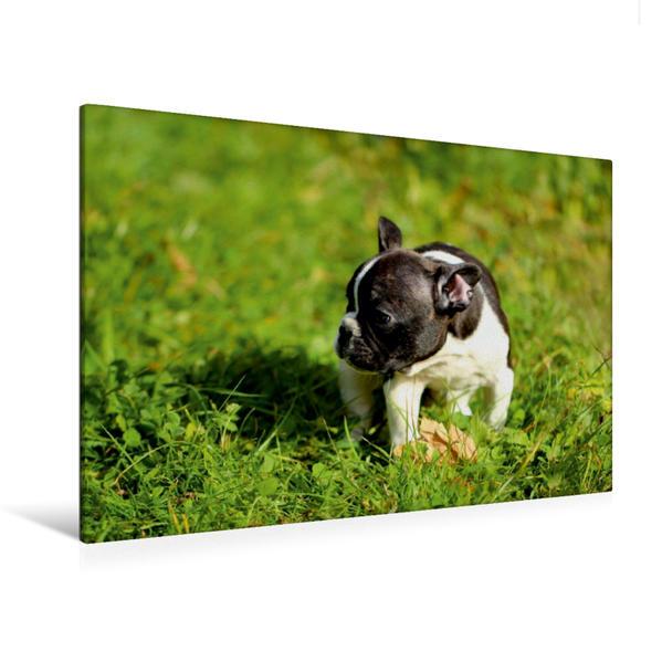 Premium Textil-Leinwand 120 cm x 80 cm quer, Wo ist meine Mama? Französische Bulldogge   Wandbild, Bild auf Keilrahmen, Fertigbild auf echter Leinwand, Leinwanddruck - Coverbild
