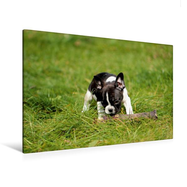Premium Textil-Leinwand 120 cm x 80 cm quer, Hundebaby auf der Wiese | Wandbild, Bild auf Keilrahmen, Fertigbild auf echter Leinwand, Leinwanddruck - Coverbild