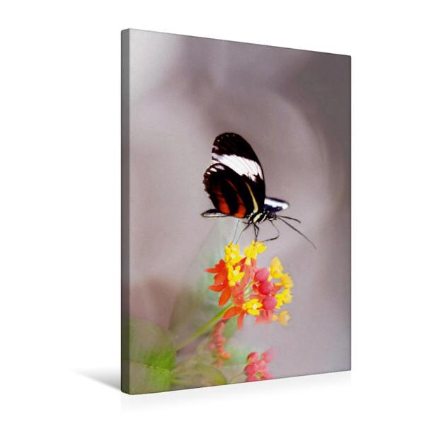 Premium Textil-Leinwand 50 cm x 75 cm hoch, Kleiner exotischer Schmetterling | Wandbild, Bild auf Keilrahmen, Fertigbild auf echter Leinwand, Leinwanddruck - Coverbild