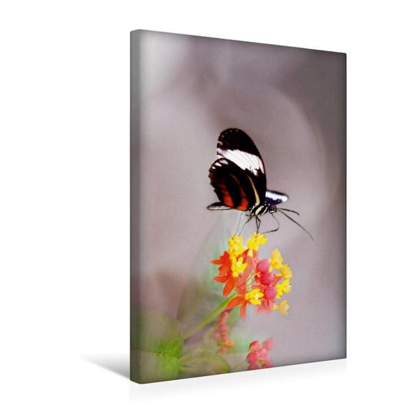 Premium Textil-Leinwand 30 cm x 45 cm hoch, Kleiner exotischer Schmetterling | Wandbild, Bild auf Keilrahmen, Fertigbild auf echter Leinwand, Leinwanddruck - Coverbild