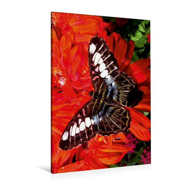 Premium Textil-Leinwand 80 cm x 120 cm  hoch, Sich sonnende exotische Schönheit | Wandbild, Bild auf Keilrahmen, Fertigbild auf echter Leinwand, Leinwanddruck - Coverbild