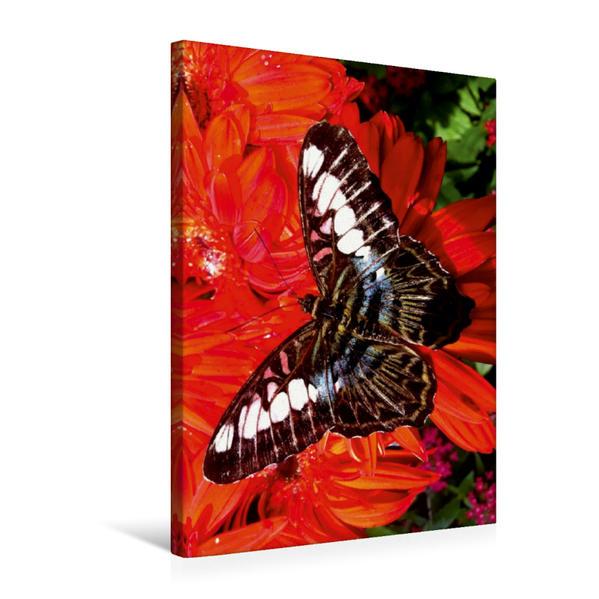 Premium Textil-Leinwand 50 cm x 75 cm hoch, Sich sonnende exotische Schönheit   Wandbild, Bild auf Keilrahmen, Fertigbild auf echter Leinwand, Leinwanddruck - Coverbild