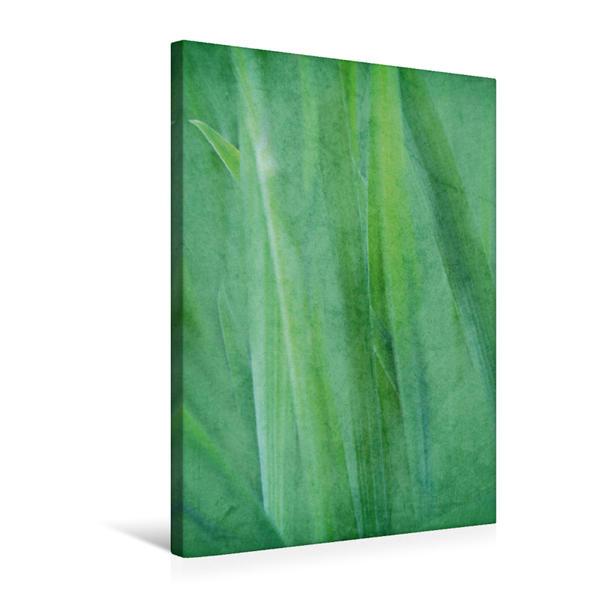 Premium Textil-Leinwand 50 cm x 75 cm hoch, Grünes Stillleben | Wandbild, Bild auf Keilrahmen, Fertigbild auf echter Leinwand, Leinwanddruck - Coverbild