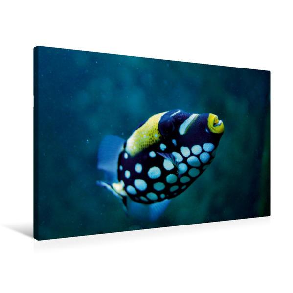Premium Textil-Leinwand 90 cm x 60 cm quer, Korallenfisch | Wandbild, Bild auf Keilrahmen, Fertigbild auf echter Leinwand, Leinwanddruck - Coverbild