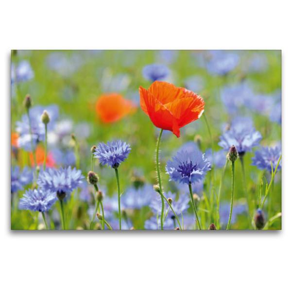 Premium Textil-Leinwand 120 cm x 80 cm quer, Mohn und Kornblumen | Wandbild, Bild auf Keilrahmen, Fertigbild auf echter Leinwand, Leinwanddruck - Coverbild