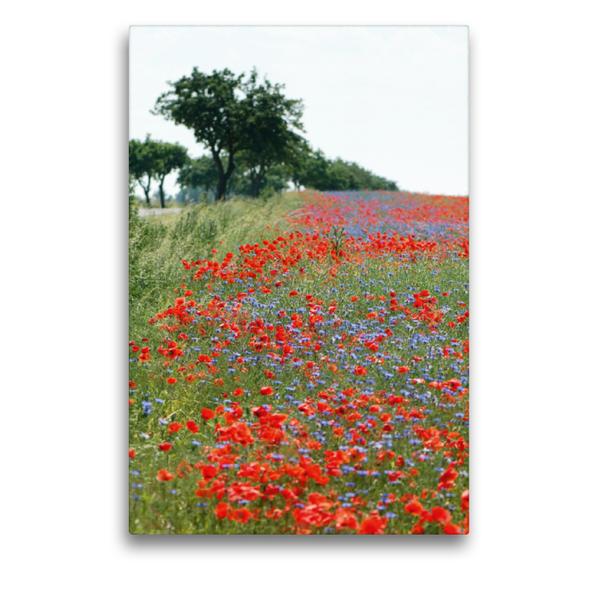 Premium Textil-Leinwand 50 cm x 75 cm hoch, Mohnfeld | Wandbild, Bild auf Keilrahmen, Fertigbild auf echter Leinwand, Leinwanddruck - Coverbild