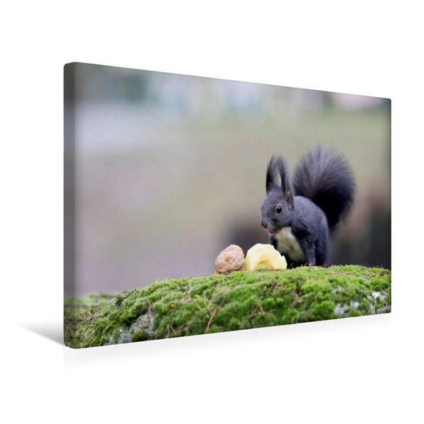 Premium Textil-Leinwand 45 cm x 30 cm quer, Als Nachtisch gab es heute mal ein Stück Apfel. Hat mir sehr gut geschmeckt... :-)   Wandbild, Bild auf Keilrahmen, Fertigbild auf echter Leinwand, Leinwanddruck - Coverbild