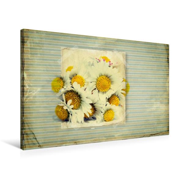 Premium Textil-Leinwand 75 cm x 50 cm quer, Gänseblümchen im shabby style | Wandbild, Bild auf Keilrahmen, Fertigbild auf echter Leinwand, Leinwanddruck - Coverbild