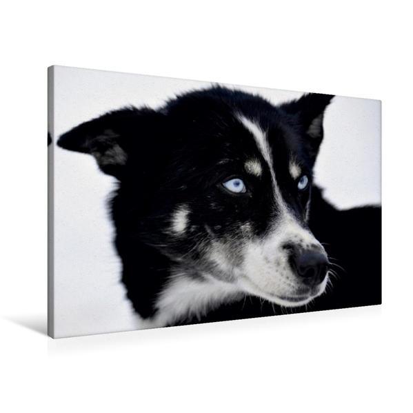Premium Textil-Leinwand 90 cm x 60 cm quer, Schlittenhund | Wandbild, Bild auf Keilrahmen, Fertigbild auf echter Leinwand, Leinwanddruck - Coverbild