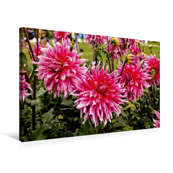 Premium Textil-Leinwand 75 cm x 50 cm quer, Rot-rosa Hybride | Wandbild, Bild auf Keilrahmen, Fertigbild auf echter Leinwand, Leinwanddruck - Coverbild