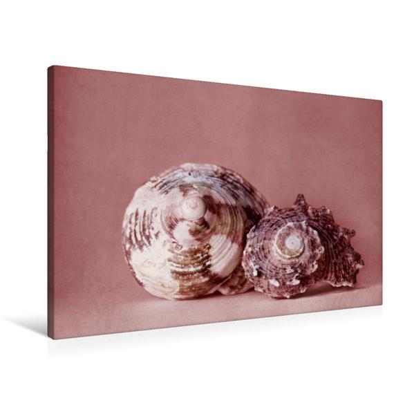 Premium Textil-Leinwand 90 cm x 60 cm quer, Meeresschnecken | Wandbild, Bild auf Keilrahmen, Fertigbild auf echter Leinwand, Leinwanddruck - Coverbild