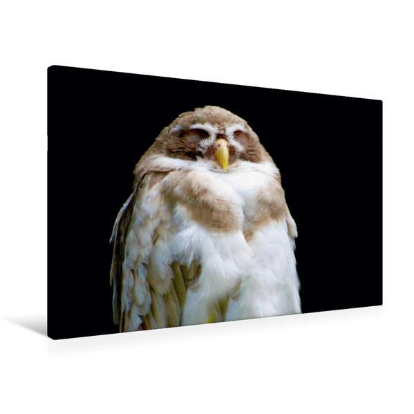 Premium Textil-Leinwand 90 cm x 60 cm quer, Ein Motiv aus dem Kalender Eulen und Käuze | Wandbild, Bild auf Keilrahmen, Fertigbild auf echter Leinwand, Leinwanddruck - Coverbild