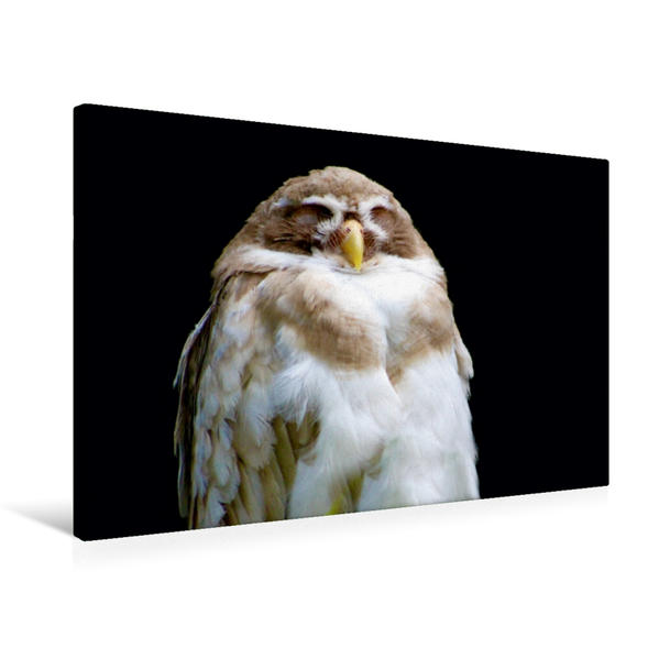 Premium Textil-Leinwand 75 cm x 50 cm quer, Ein Motiv aus dem Kalender Eulen und Käuze | Wandbild, Bild auf Keilrahmen, Fertigbild auf echter Leinwand, Leinwanddruck - Coverbild