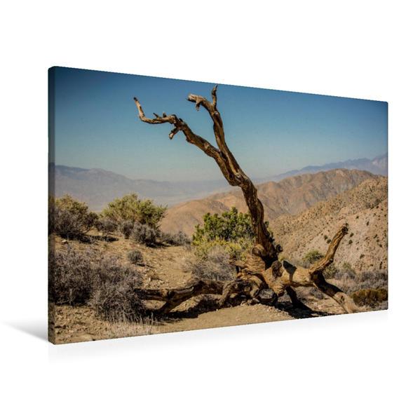 Premium Textil-Leinwand 90 cm x 60 cm quer, Joshua Tree | Wandbild, Bild auf Keilrahmen, Fertigbild auf echter Leinwand, Leinwanddruck - Coverbild