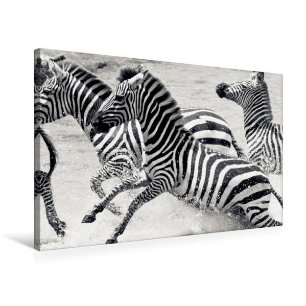 Premium Textil-Leinwand 75 cm x 50 cm quer, Ein Motiv aus dem Kalender Emotionale Momente: Zebras - black and white. | Wandbild, Bild auf Keilrahmen, Fertigbild auf echter Leinwand, Leinwanddruck - Coverbild
