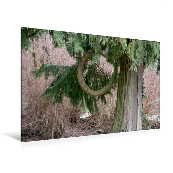 Premium Textil-Leinwand 120 cm x 80 cm quer, Natur pur | Wandbild, Bild auf Keilrahmen, Fertigbild auf echter Leinwand, Leinwanddruck - Coverbild