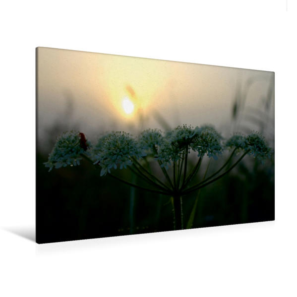 Premium Textil-Leinwand 120 cm x 80 cm quer, Weiße Blüten bei Sonnenaufgang | Wandbild, Bild auf Keilrahmen, Fertigbild auf echter Leinwand, Leinwanddruck - Coverbild