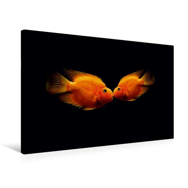 Premium Textil-Leinwand 75 cm x 50 cm quer, Ein Kuss unter Wasser | Wandbild, Bild auf Keilrahmen, Fertigbild auf echter Leinwand, Leinwanddruck - Coverbild