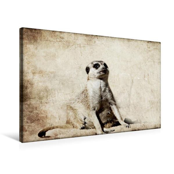 Premium Textil-Leinwand 75 cm x 50 cm quer, EinzahnErdhörnchen | Wandbild, Bild auf Keilrahmen, Fertigbild auf echter Leinwand, Leinwanddruck - Coverbild