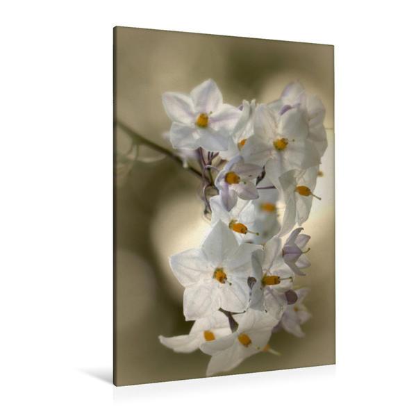 Premium Textil-Leinwand 80 cm x 120 cm  hoch, Nachtschatten Jasmin | Wandbild, Bild auf Keilrahmen, Fertigbild auf echter Leinwand, Leinwanddruck - Coverbild