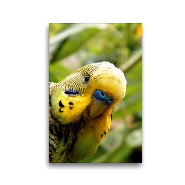 Premium Textil-Leinwand 30 cm x 45 cm hoch, Wellensittich Portrait | Wandbild, Bild auf Keilrahmen, Fertigbild auf echter Leinwand, Leinwanddruck - Coverbild