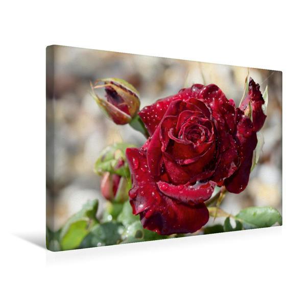 Premium Textil-Leinwand 45 cm x 30 cm quer, Zauberhafte Rosen   Wandbild, Bild auf Keilrahmen, Fertigbild auf echter Leinwand, Leinwanddruck - Coverbild