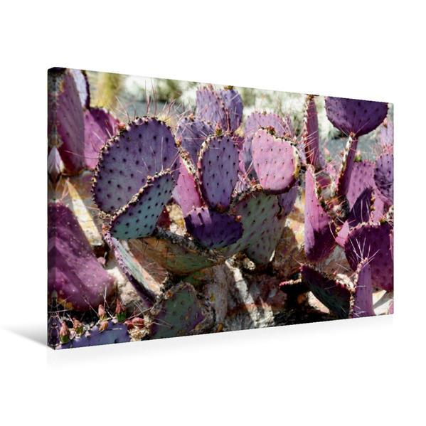 Premium Textil-Leinwand 75 cm x 50 cm quer, Opuntia Macrocentra, Mexico | Wandbild, Bild auf Keilrahmen, Fertigbild auf echter Leinwand, Leinwanddruck - Coverbild