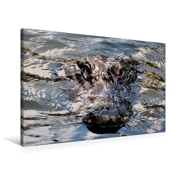 Premium Textil-Leinwand 90 cm x 60 cm quer, Alligator | Wandbild, Bild auf Keilrahmen, Fertigbild auf echter Leinwand, Leinwanddruck - Coverbild