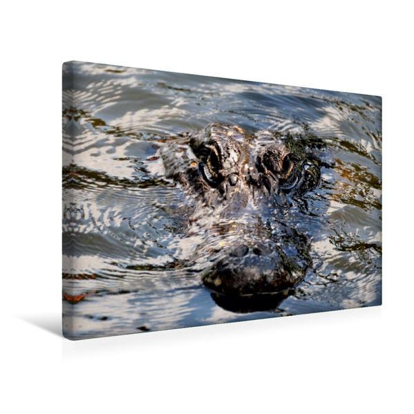 Premium Textil-Leinwand 45 cm x 30 cm quer, Alligator | Wandbild, Bild auf Keilrahmen, Fertigbild auf echter Leinwand, Leinwanddruck - Coverbild