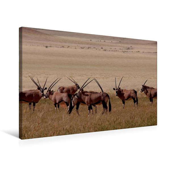 Premium Textil-Leinwand 75 cm x 50 cm quer, Oryx | Wandbild, Bild auf Keilrahmen, Fertigbild auf echter Leinwand, Leinwanddruck - Coverbild