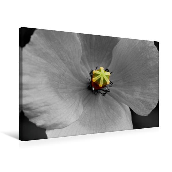 Premium Textil-Leinwand 75 cm x 50 cm quer, Blütenstempel einer Mohnblüte, Colorkey | Wandbild, Bild auf Keilrahmen, Fertigbild auf echter Leinwand, Leinwanddruck - Coverbild