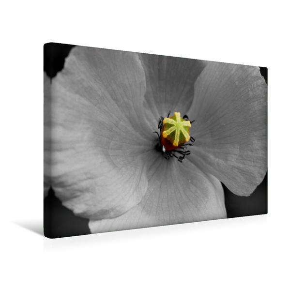 Premium Textil-Leinwand 45 cm x 30 cm quer, Blütenstempel einer Mohnblüte, Colorkey | Wandbild, Bild auf Keilrahmen, Fertigbild auf echter Leinwand, Leinwanddruck - Coverbild