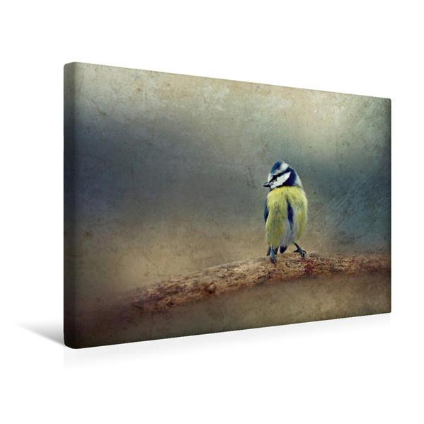 Premium Textil-Leinwand 45 cm x 30 cm quer, Stolze Blaumeise | Wandbild, Bild auf Keilrahmen, Fertigbild auf echter Leinwand, Leinwanddruck - Coverbild