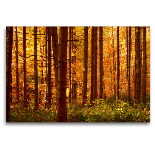 Premium Textil-Leinwand 120 cm x 80 cm quer, Herbst Wald   Wandbild, Bild auf Keilrahmen, Fertigbild auf echter Leinwand, Leinwanddruck - Coverbild