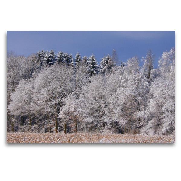 Premium Textil-Leinwand 120 cm x 80 cm quer, Mischwald im Winter | Wandbild, Bild auf Keilrahmen, Fertigbild auf echter Leinwand, Leinwanddruck - Coverbild